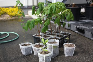 5種類の樹木を並べたところ